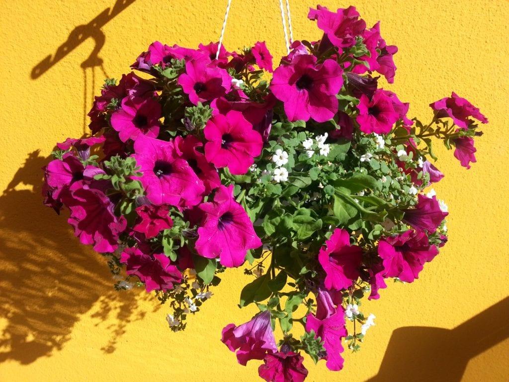 Balkon Bepflanzen Farbe