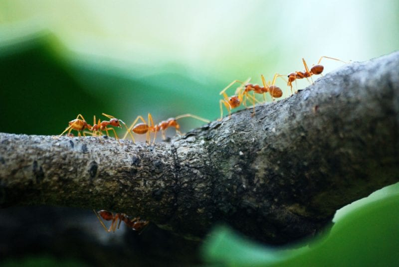 Hausmittel Gegen Ameisen Gartenora De