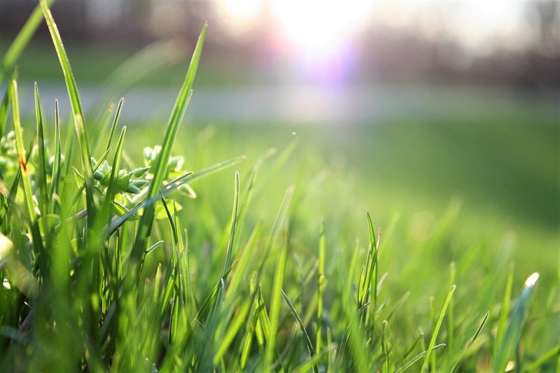 Wann Sollte Der Rasen Vertikutiert Werden Gartenorade