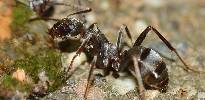 Ameisen im Haus - Was dagegen gemacht werden kann - gartenora.de