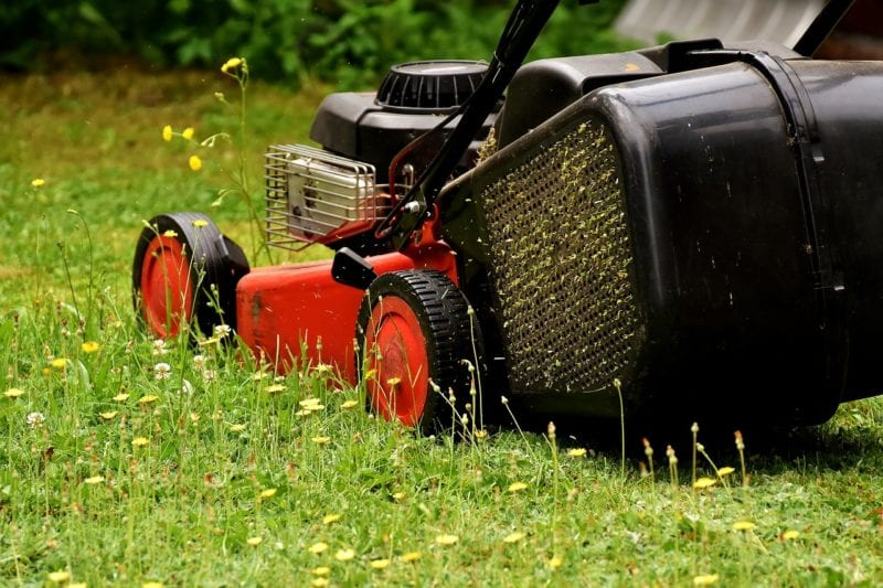 Pilze im Rasen mähen