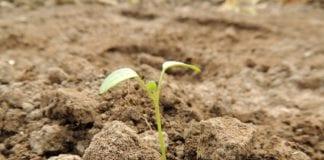 Rasen Keimen Dauer