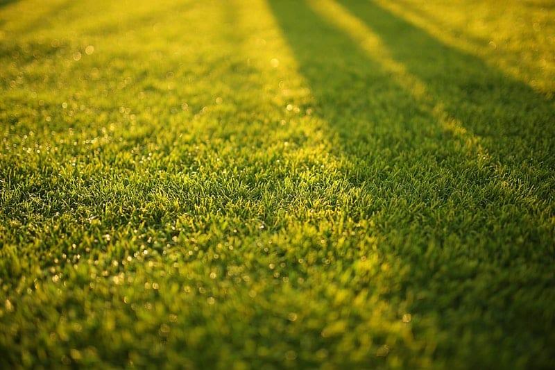 Rasen Säen Garten