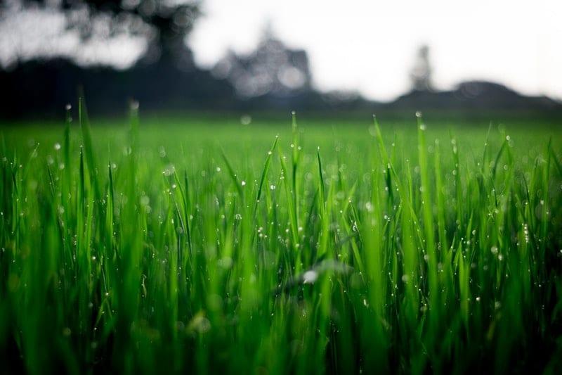 Rasen Säen Tipps Für Den Perfekten Rasen Gartenorade