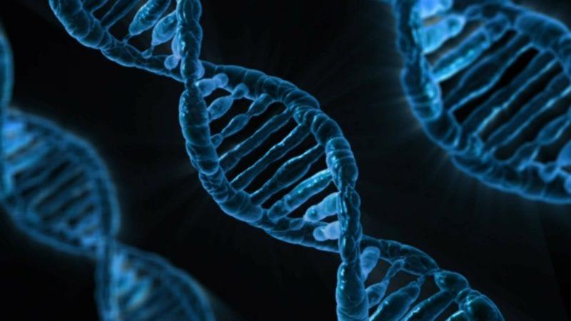Fruchtfliegen Lebensdauer - Genetik
