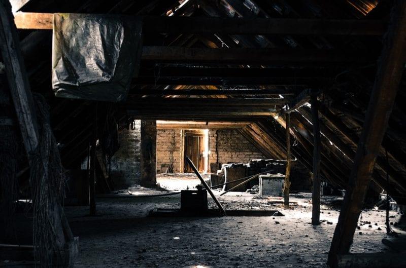 Marder auf dem Dachboden