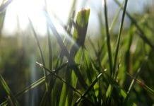 Rasenmähen bei Sonne
