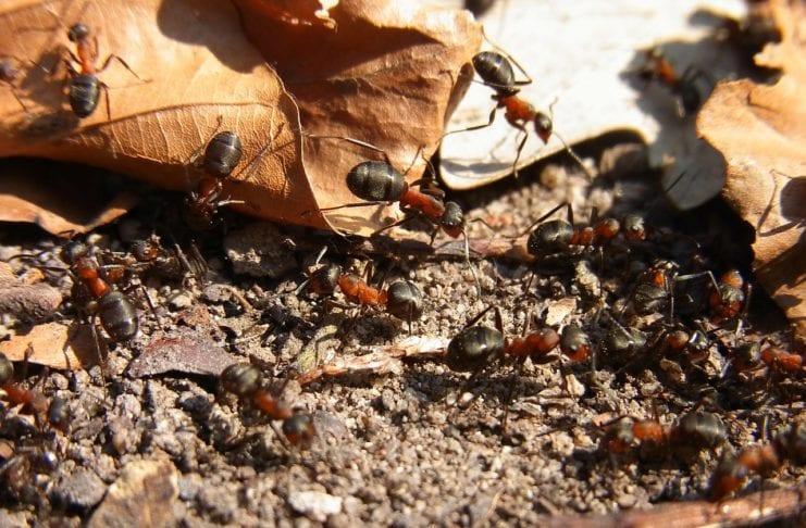 Ameisengift