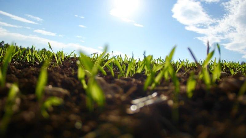 Beliebt Bevorzugt Blaukorn als Rasendünger verwenden - gartenora.de @NZ_13