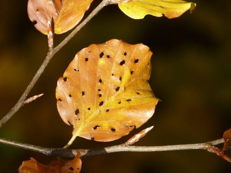 Schneckenzaun gegen Fressschäden