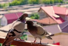 Vogelscheuche Balkon