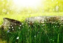 Hohes Gras Mähen