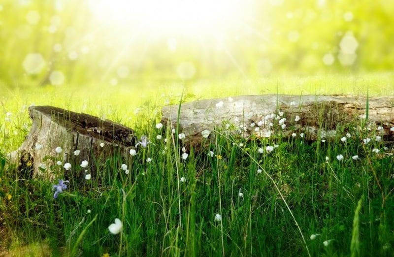 Wie Sie Hohes Gras Mähen Können Gartenorade