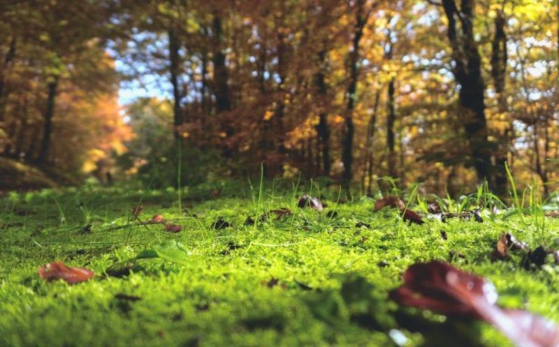 Atemberaubend Moosvernichter - Werden Sie das Moos im Rasen effektiv los &HT_54