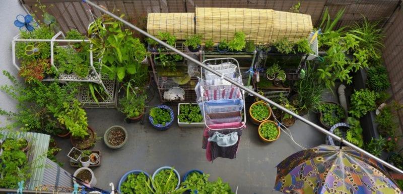 Ranknetz Gurken Balkon