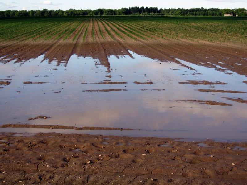 Rasen begradigen - Regenfälle