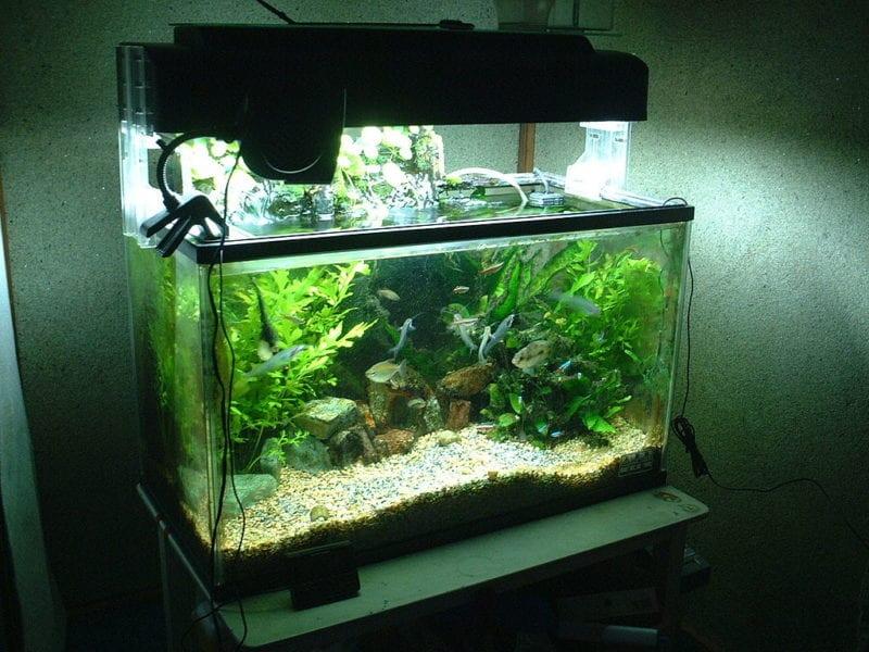 Schneckenfalle Aquarium Becken