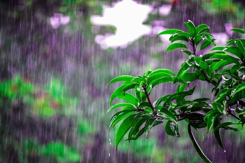 Wetterstation Niederschlag