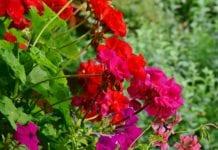 Blumenkästen mit Wasserspeicher