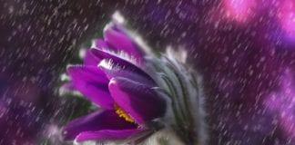 Digitale Regenmesser