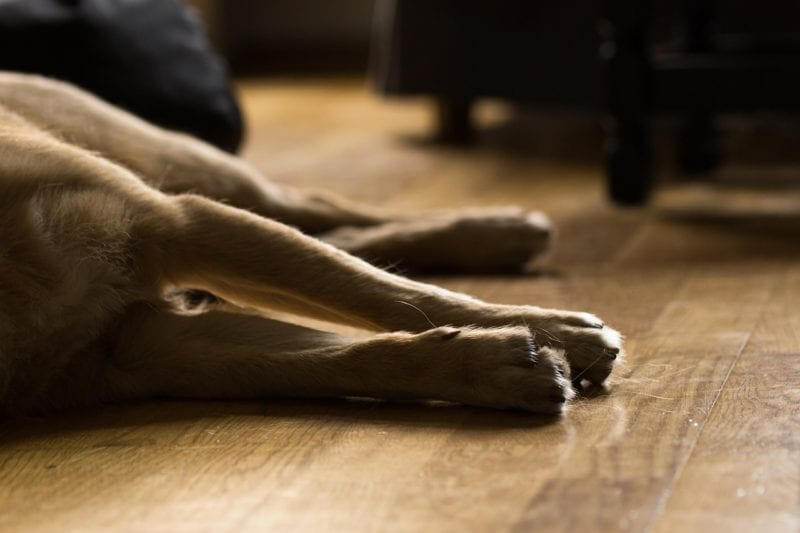Luftfeuchtigkeit Hund