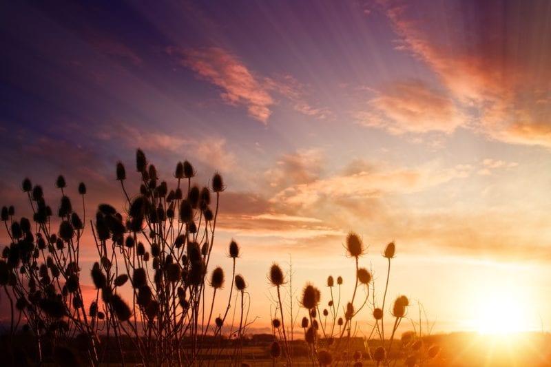 Pflanzen Balkon - Sonne