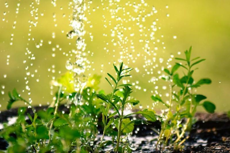 Regen Garten