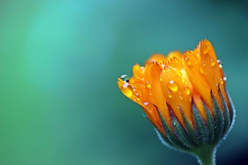 Wetterstation mit Regenmesser - Pflanzen