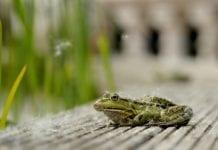 Froggit WH3000