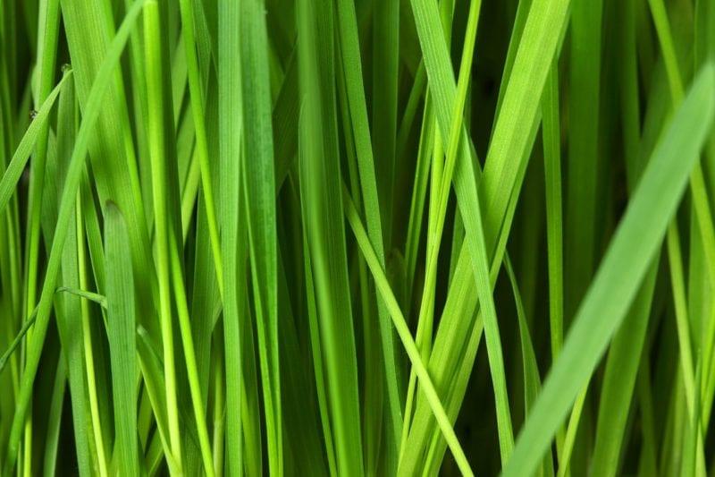 Etwas Neues genug Rasenerde - Beste Bedingungen für Ihren Rasen - gartenora.de #NH_75