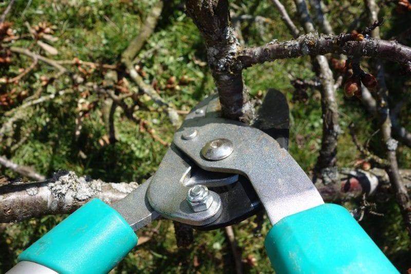 Schneiden für Teleskop Baumschere