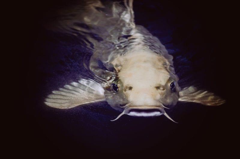Fische Teich