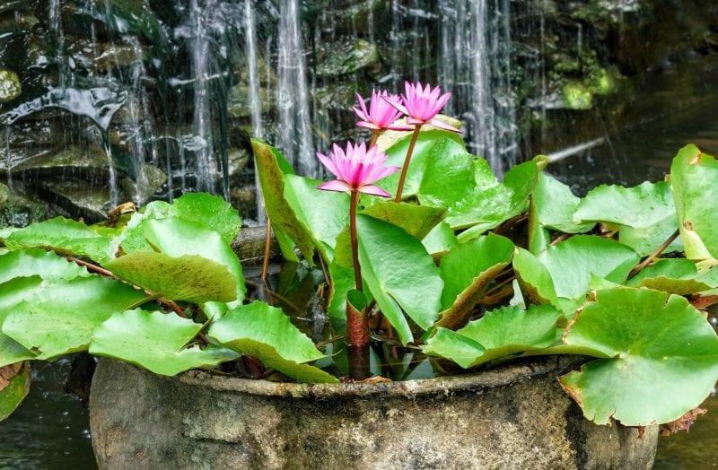 Wasserfall Garten