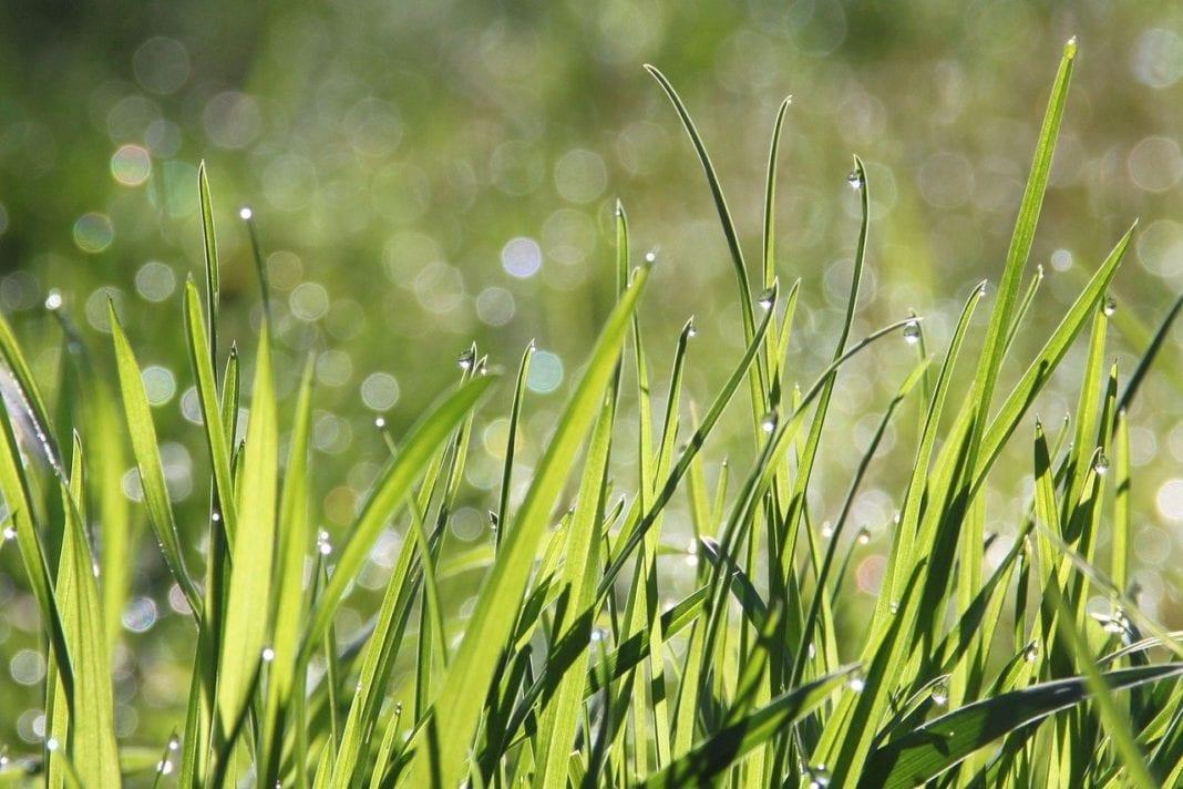 Ein Bild, das sitzend, Gras, Vogel enthält. Automatisch generierte Beschreibung
