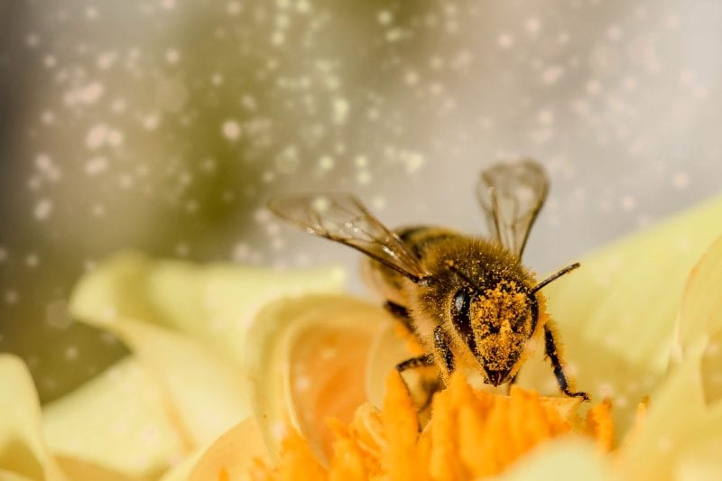 Biologische Mittel - Bienen