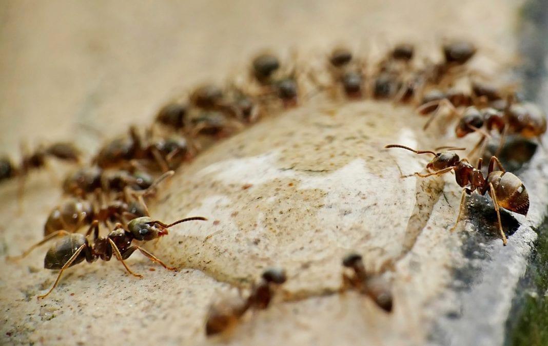 Ameisen Terrasse