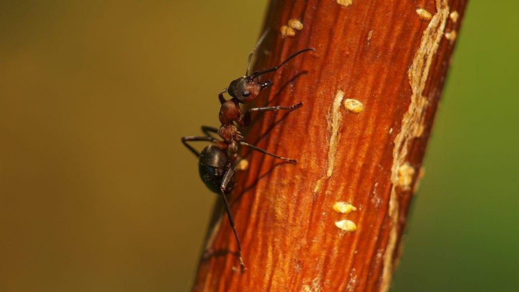 Ameisen im Sandkasten gefährlich