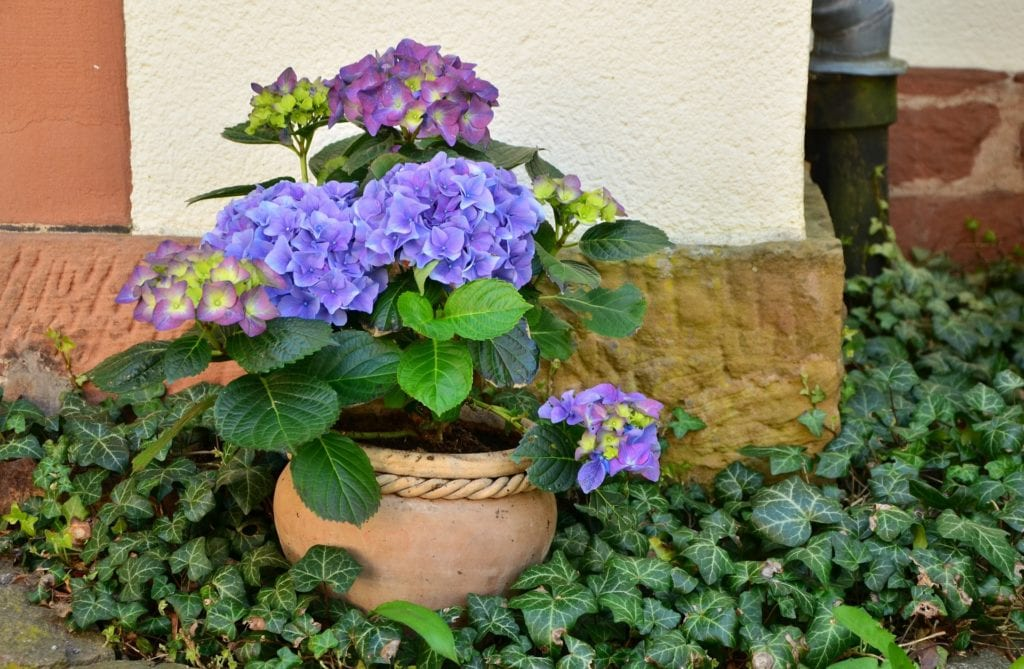 Blumenkübel mit Humuserde