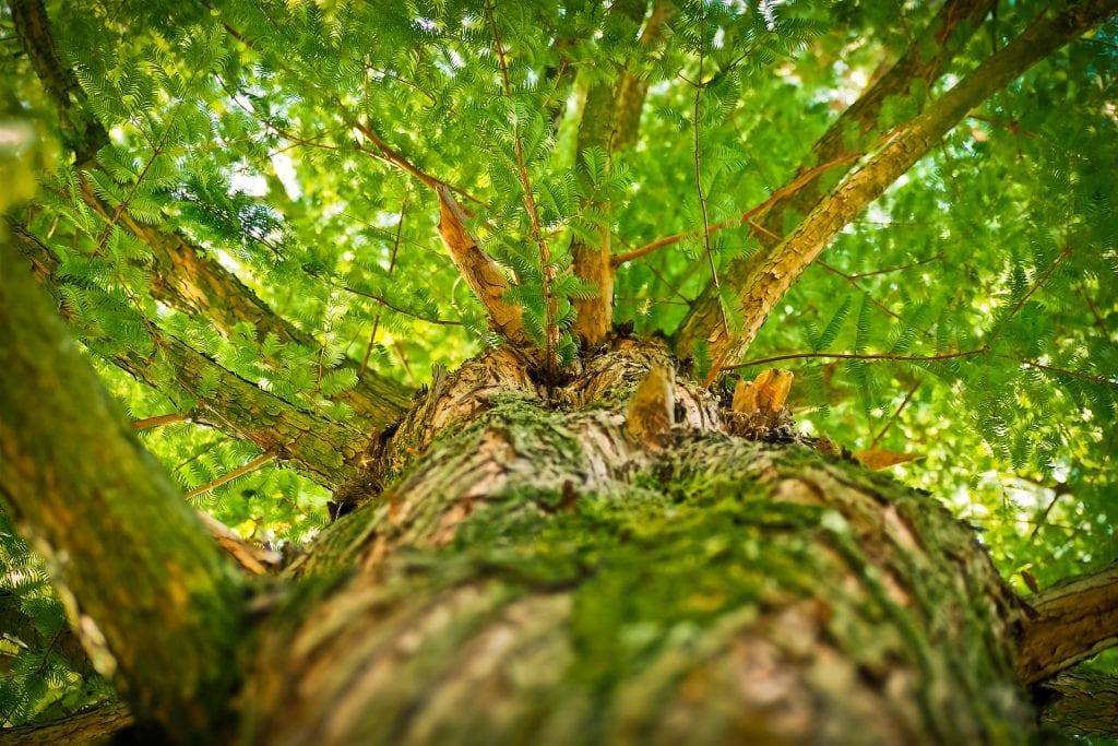 Baum Schaden durch Ameise