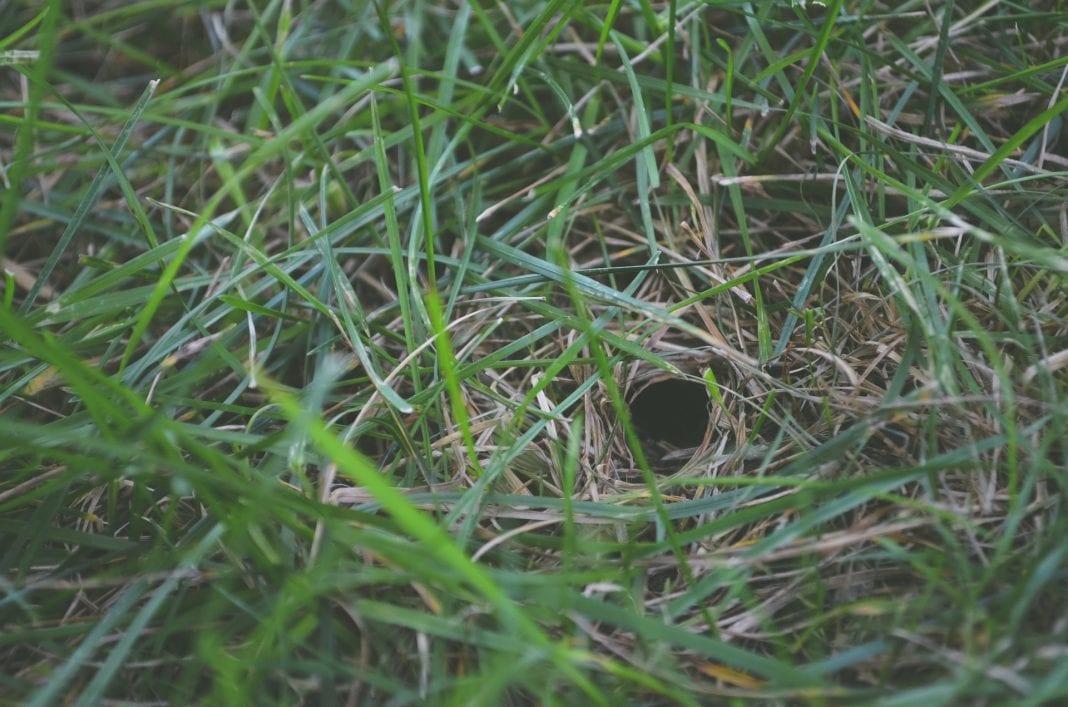 Löcher im Rasen