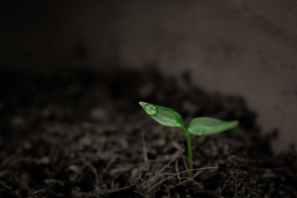 Rasendünger - Bewässerung