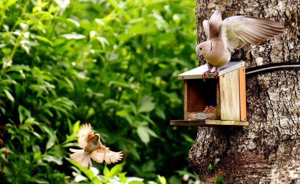 Tauben füttern Balkon