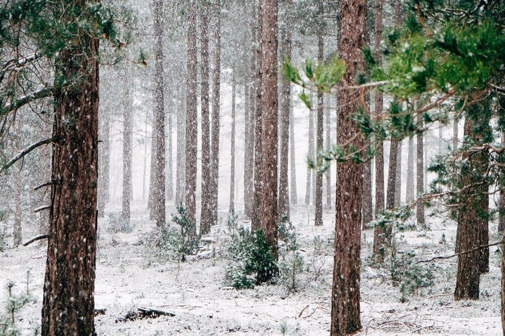 Ameise - Winter nachtaktiv