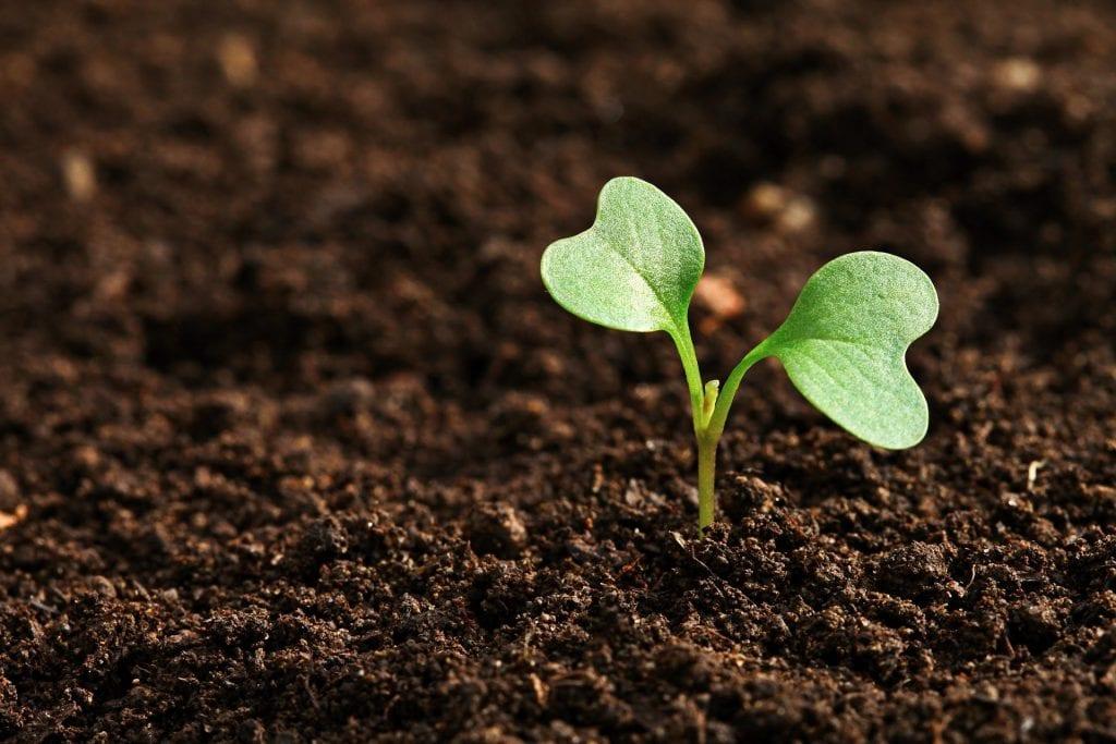 pH-Bereich Pflanze