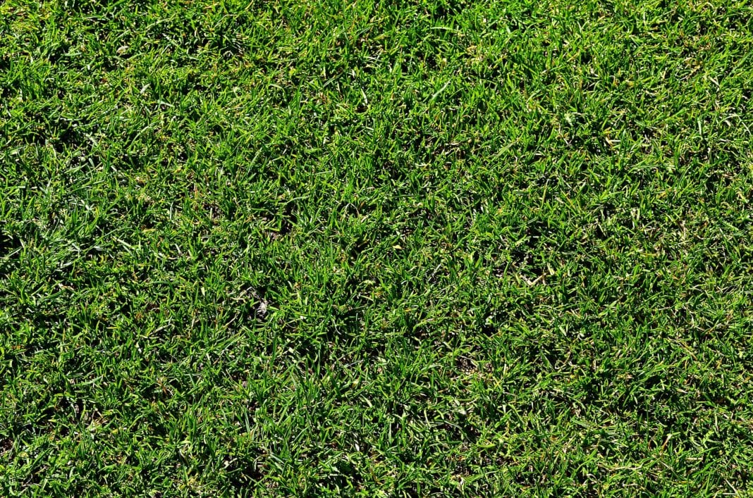 pH-Wert Rasen
