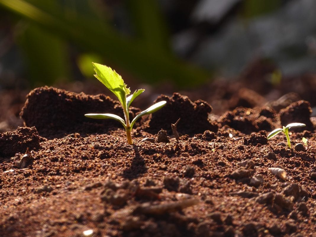 pH-Wert im Boden senken