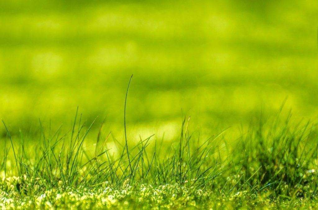 Frühjahrsdünger - Stickstoff