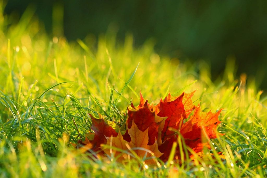Laub auf Rasen entfernen