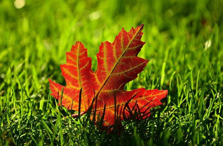 Rasendünger Herbst