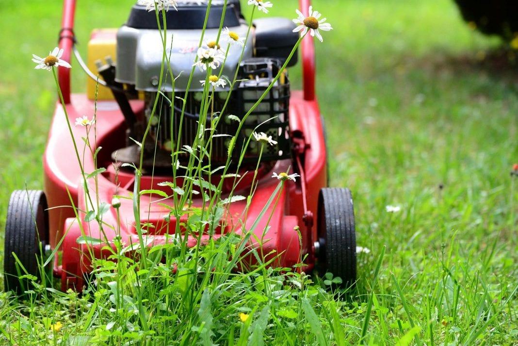 Rasenmäher Frühling
